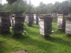 Мед натуральный, прополис, мед в сотах - Изображение #3, Объявление #1647541