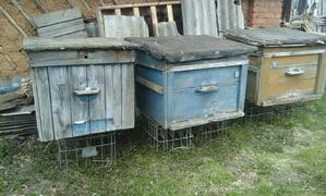 Пчелиные домики, корпуса с сушью - Изображение #1, Объявление #1647542