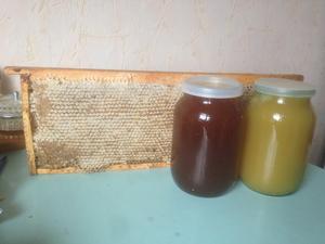 Мед натуральный, прополис, мед в сотах - Изображение #4, Объявление #1647541