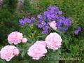 декоративные кустарники, садовые растения.
