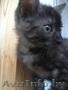 Котенок мраморного окраса в добрые руки!