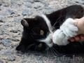 Красавец-котомужчина в дар!