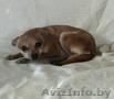 Маленькая собачка ответственным владельцам - Изображение #3, Объявление #1614632