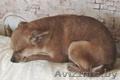 Маленькая собачка ответственным владельцам - Изображение #6, Объявление #1614632